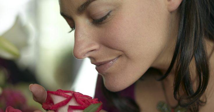 Cómo enraizar un esqueje de un rosal. Hay cientos de miles de variedades de rosas que han sido desarrolladas durante los últimos 200 años. Las variedades de rosas son apreciadas y caen en desuso anualmente. El rosal aromático que adorabas en tu niñez, tal vez no esté disponible para la compra en la actualidad. Generalmente, los híbridos más renombrados recientemente y las ...