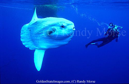Mysterious Animals Of The World | ... @ Ultimate-Guitar.Com - Mysterious & Weird creatures of the world