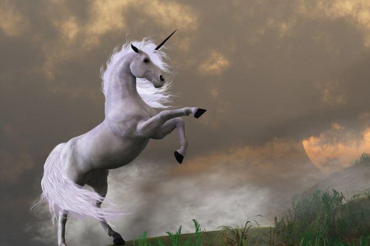 Scotland's national animal is a unicorn.