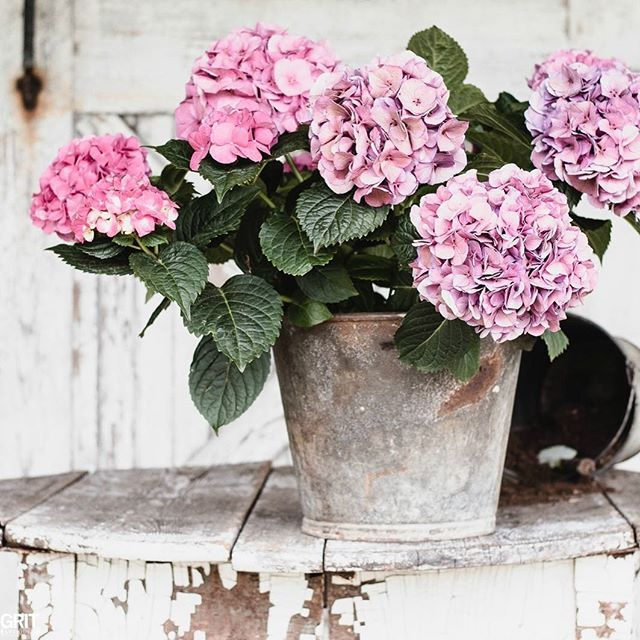 Flea Market Finds And Hydrangeas Spring Decorating