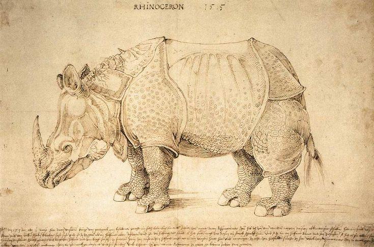 rhinoceros painting durer