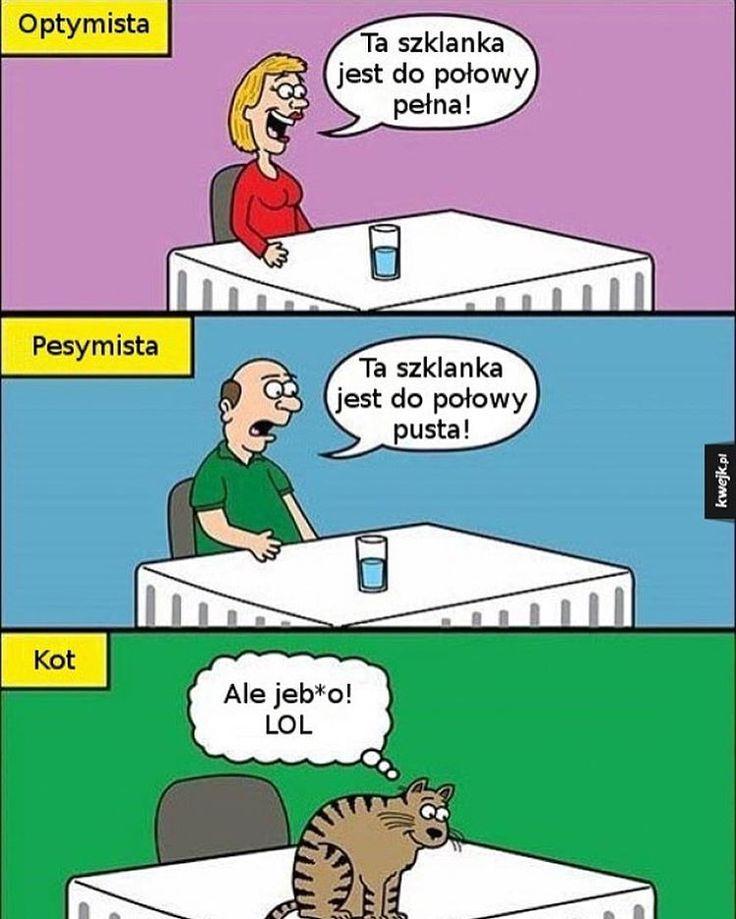 """""""Kot. #kwejk #humor #heheszki #śmieszki #żarty #żarciki #lol #haha #hehe #śmieszne #śmiesznie #obraz #obrazek #zdjęcia #zdjęcie #kot #koteł #zwierzęta…"""""""