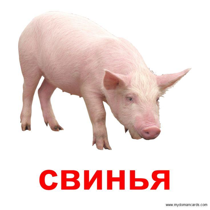 Свинья -  Бесплатная Карточка Домана