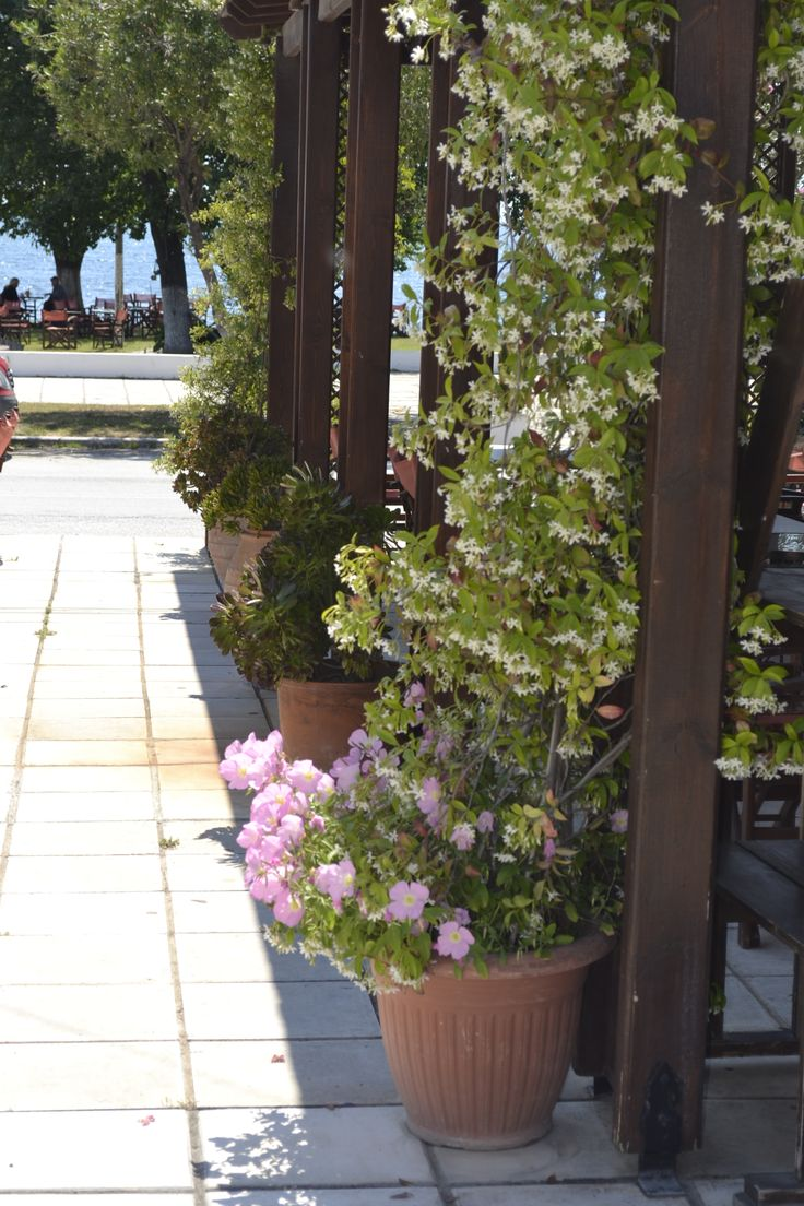 Our beautifull flowers !!!! #Raidou