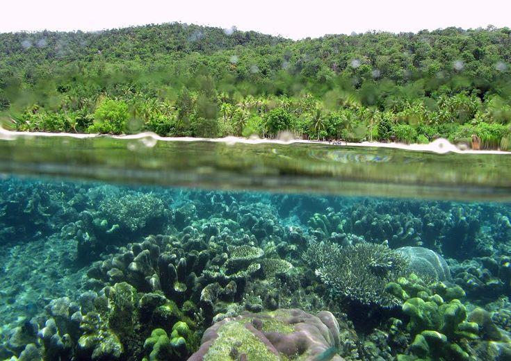 Pulau Kri Cantiknya Kerajaan Bawah Air di Papua Barat - Papua Barat