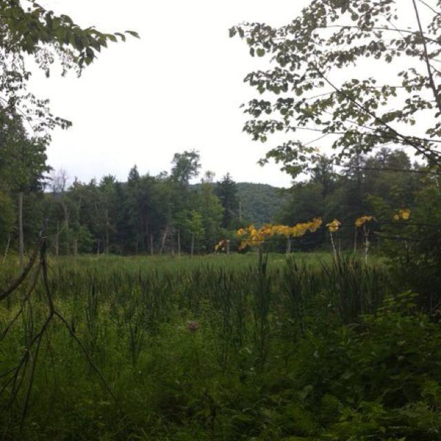 Field in Gatineau Park
