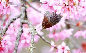 Обои дерево, птица, весна, цветение