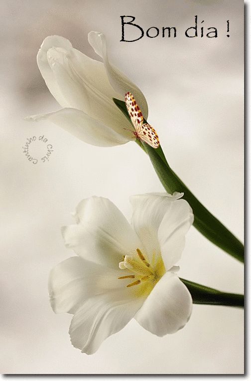 Trago a paz no coração...e uma alegria radiante na alma...Tenho a fé iluminando meu caminho...e Deus guiando meus passos . (Liahna Mell)