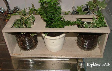 plantes_rempot_es