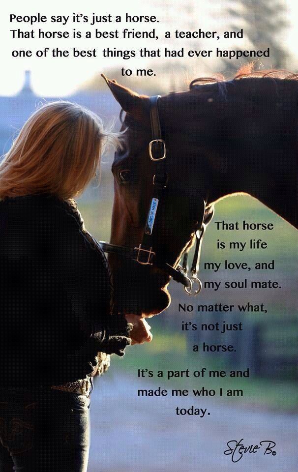 Quotes On Losing A Horse. QuotesGram                                                                                                                                                                                 More