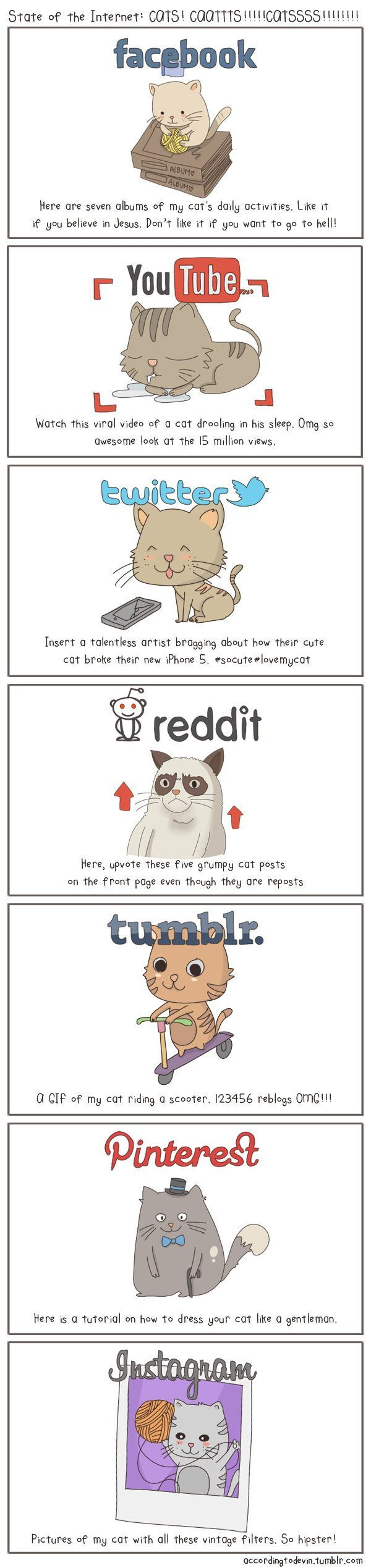Cats and Social Media
