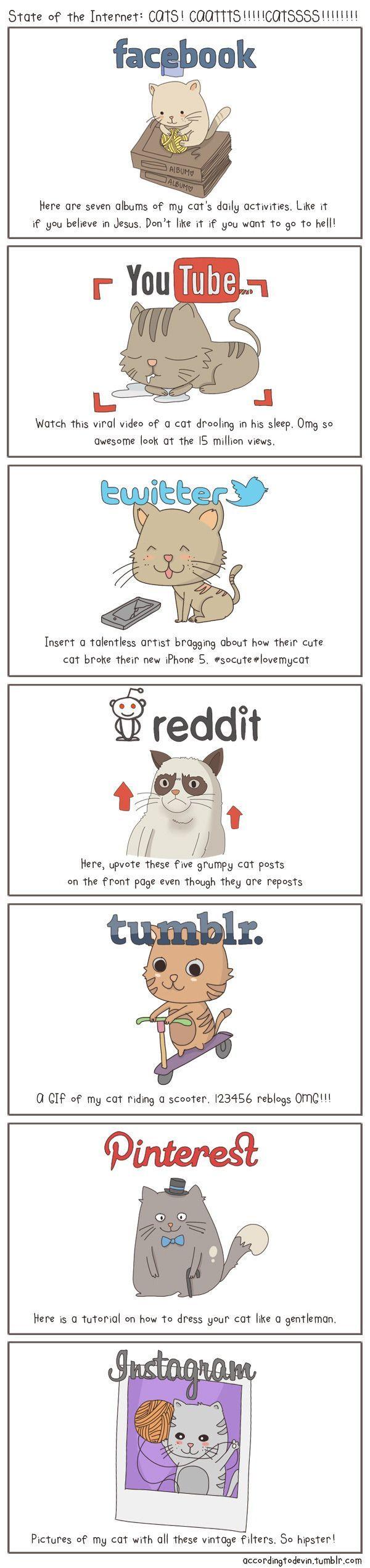 Cats and Social Media