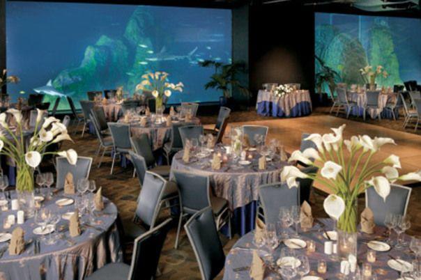 The Camden Aquarium, Camden