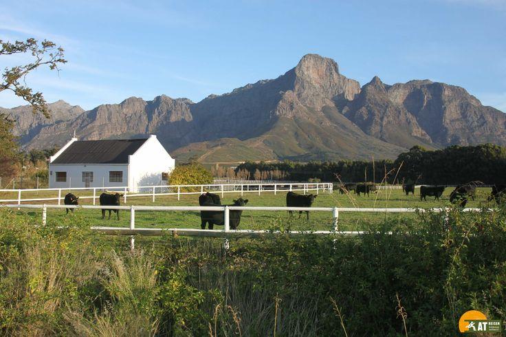 Die #Winelands in #Südafrika zählen zu den bedeutendsten #Weinanbaugebieten der Welt. Die Region befindet sich rund um  #Kapstadt.