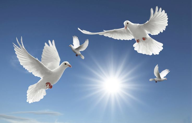 Cross and dove background - photo#28