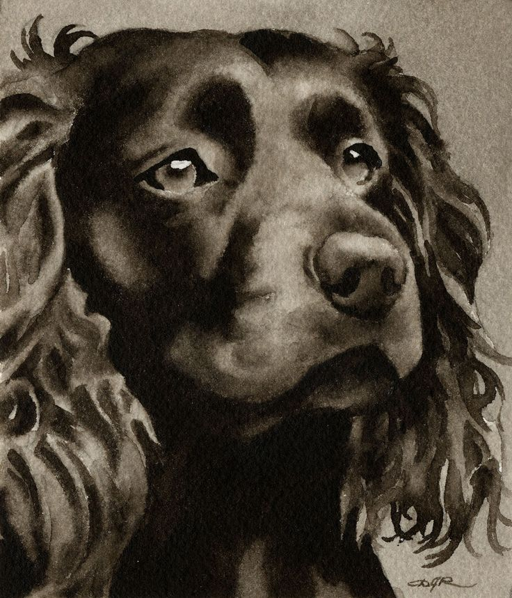314 best boykin love images on pinterest doggies dog watercolor dog painting boykin spaniel watercolor dog art 13 x 17 signed djr solutioingenieria Images