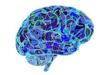 El cerebro humano puede almacenar todo el contenido de Internet Clickmobile.es