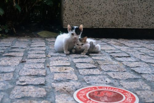 #Tumblr antoniusthegr8:  Street Cats Kuala Lumpur Malaysia   Hotels...