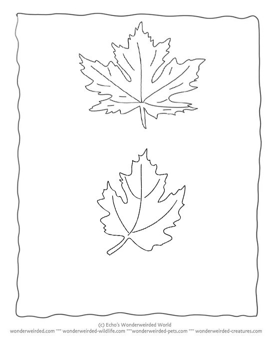 1000 images about 3 Leaves on