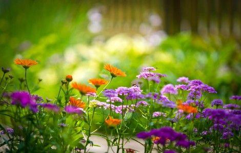 Flowers, Beautiful 4K Wallpaper
