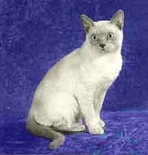 "GC, BW Chestnutfarm Jackson of Wan-Lea, CFA's Region 7's Best Tonkinese in Championship 2002-2003, Region 7's Best Tonkinese Kitten and CFA National Best Platinum Tonkinese Kitten  2001-2002.        Jackson sired my Tonk, Tasha and is the ""grand-sire"" to my Tonk, Mischa."