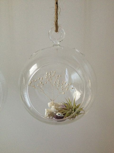 Air Plant Terrarium # 70 | Flickr - Photo Sharing!