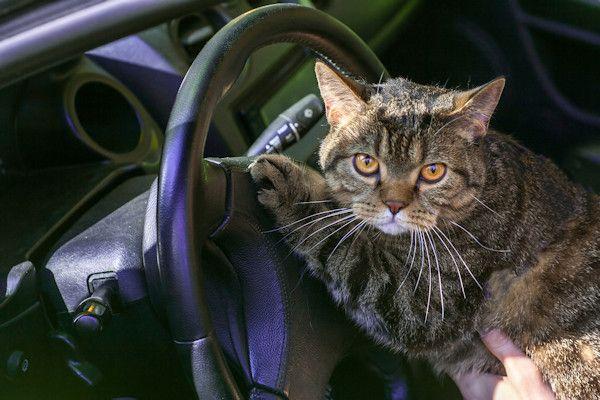 """Nu we te maken hebben met warm weer, is het belangrijk om dierenniet achter te laten in de auto. Daarvoor waarschuwt dierenarts Thijs Snibbert. """"Niet alleen honden hebben last van de warmte, maar ook katten, cavia's en andere huisdieren"""", aldus Snibbert. De Dierenbescherming geeft al jaren het advies om honden met warm weer niet achter te laten in een afgesloten [...]"""