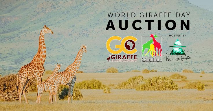 First #Auction for #Giraffe Conservation Foundation! Bidding is open now until midnight on 21 June, 2015 (World Giraffe Day). Many people don't realize that giraffe are not as abundant as they once were. In fact, there are less than 400 West African giraffe in the wild today. Two subspecies of giraffe are #endangered, and the species is already #extinct in 7 African countries. Your support can make a difference to the future of this species…