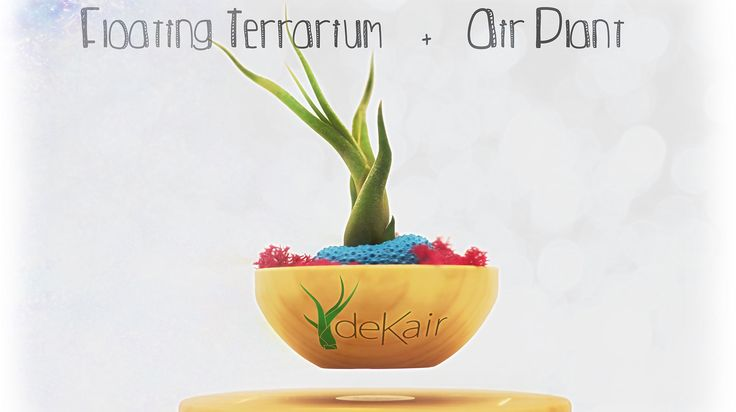 Good morning! 🌅  Today #Monday we start the week with different and simple 💡 ideas to #decorate using #AirPlants 🎍  https://www.dekair.com/en/blog/post/Beautiful-and-simple-ideas-for-decorating-with-Air-Plants  What are your decoratve compositions? 📔 Show us yours  #Spread your #love ❤, take care of the #planet 🌏