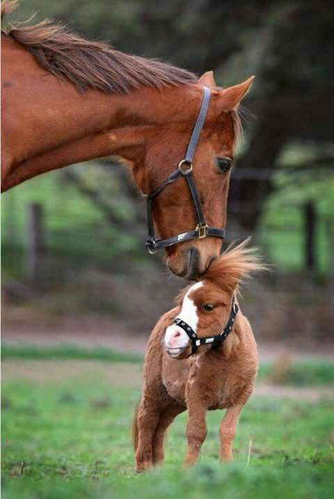 Bad hair day for this little horse, looks like big horse is giving him a hand.