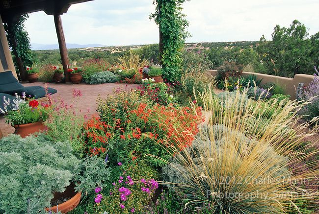 363 best xeriscape designs images on pinterest for Garden design xeriscape