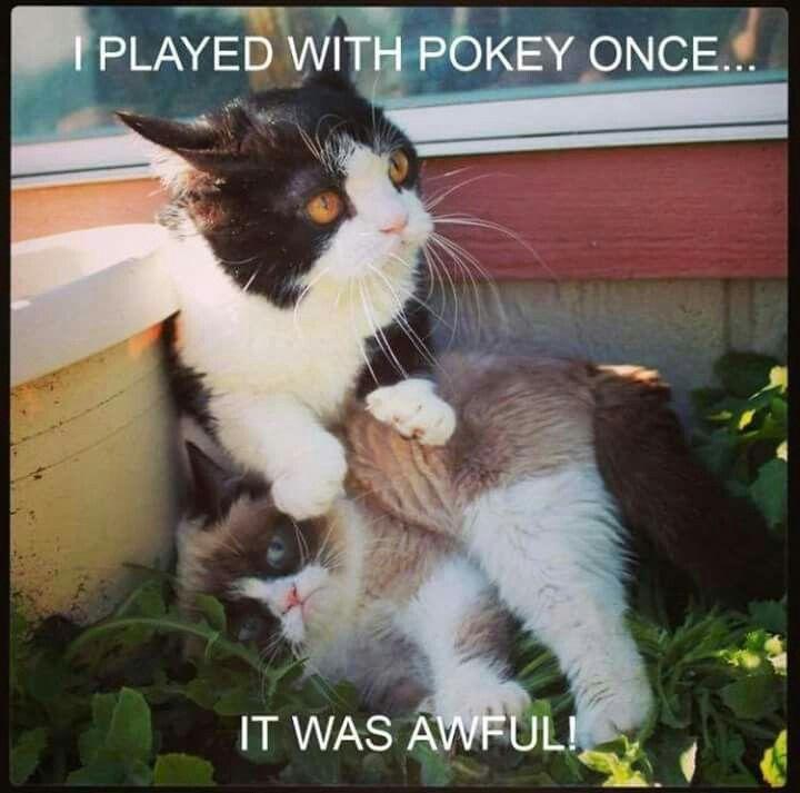 grumpy cat wedding invitations%0A Grumpy Cat with brother  Pokey
