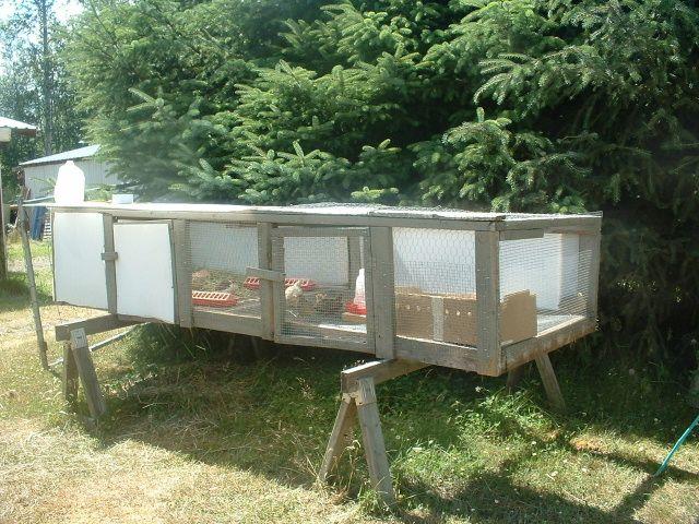 Backyard Quail Production :  Quail Cage, Button Quail, Backyard Quail, Chicken Quail, Farming Quail