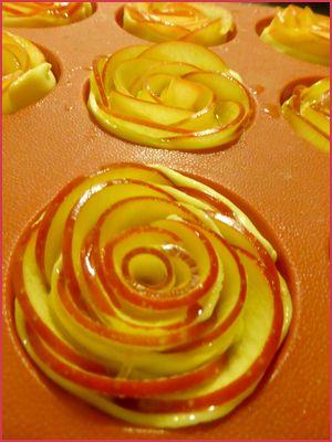 Rose pomme etp6
