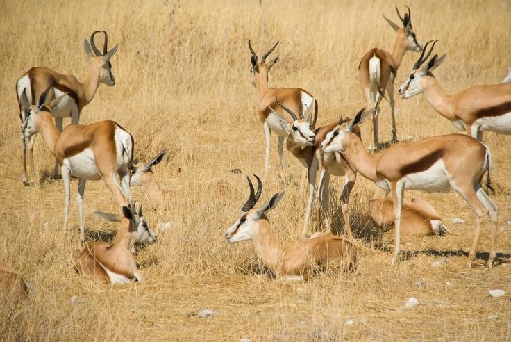 Etosha National Park, In the Vast Arid Space of Northern Namibia