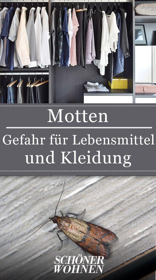Motten Bekampfen So Werden Sie Motten Wieder Los In 2020 Motten In Der Wohnung Kleidermotten Motten Im Schrank