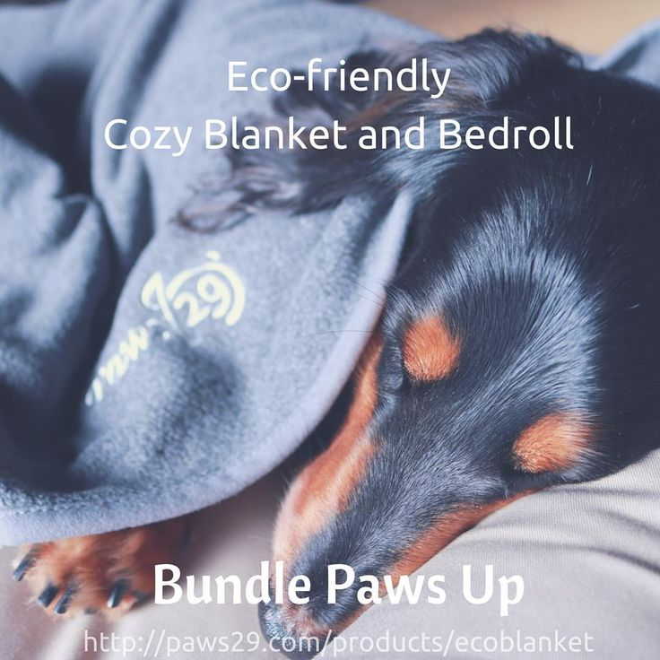 Bundle paws up and stay warm✨ #paws29 #paws29furry #blanket #bundleup #bundlepawsup#ワンコ#いぬら部#ブランケット#毛布にくるまる#寒い#シンプル#クリスマスプレゼント#dog#pet#petowner#ecofriendly#staywarm#simplebeauty#beautiful#love##ilovemypet#dogofthetoday#dogofinstagram#christmas#dachshund#ダックスフンド