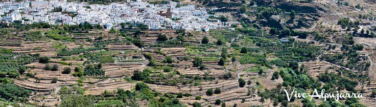 Agricultura yemení? Vive Alpujarra. Conoce más sobre esta comarca:  www.facebook.com/Vive.Alpujarra
