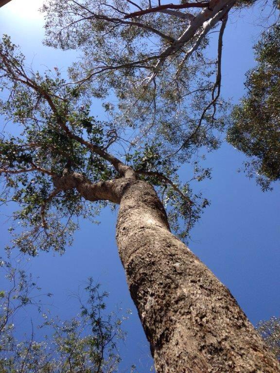 I really love trees.