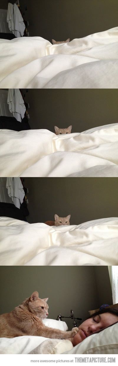 How cat people wake up…  This is true, except Snarf bites my husbands face first.