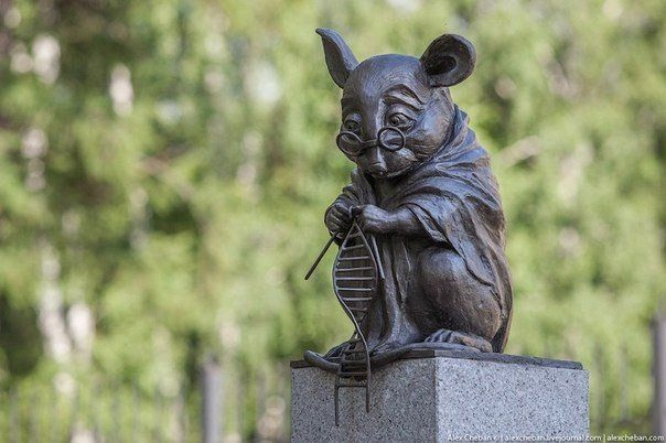 A monument to a lab rat (Novosibirsk, Russia)
