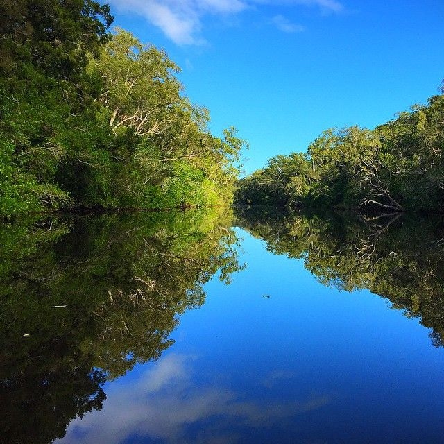It's easy to see why the Noosa Everglades are nicknamed the River of Mirrors! One of only two Everglades system in the world, the Noosa Everglades are the feeding grounds for an abundance of migratory shorebirds and home to several rare and threatened species.