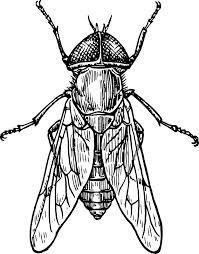 Afbeeldingsresultaat voor drawing bug