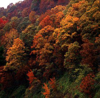 Beginning 9/24, check here each week for Arkansas's fall color updates! #VisitArkansas #ArkansasFall #FallColor
