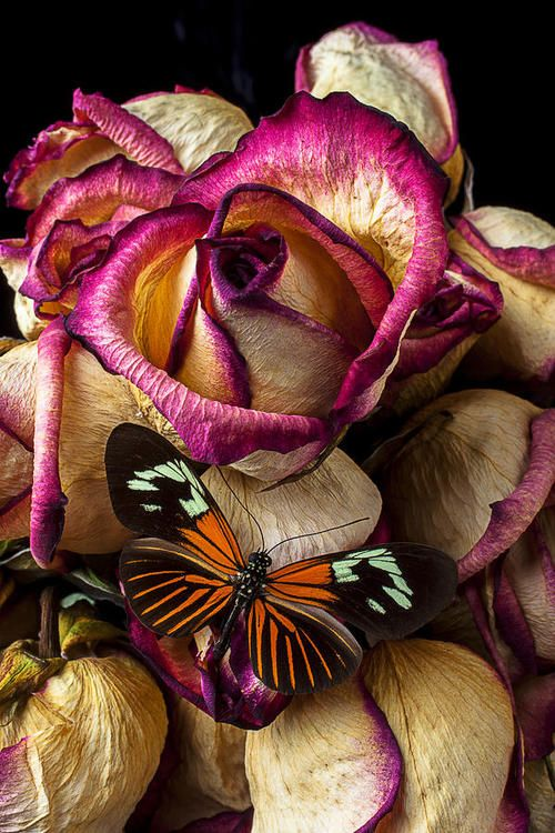 Dried Rose And Butterfly Photograph by Garry Gay -