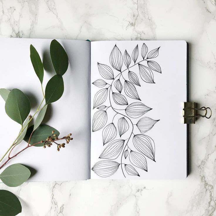 Bullet journal drawing idea, leaf drawing, plant drawing. @wildgingerdesigns