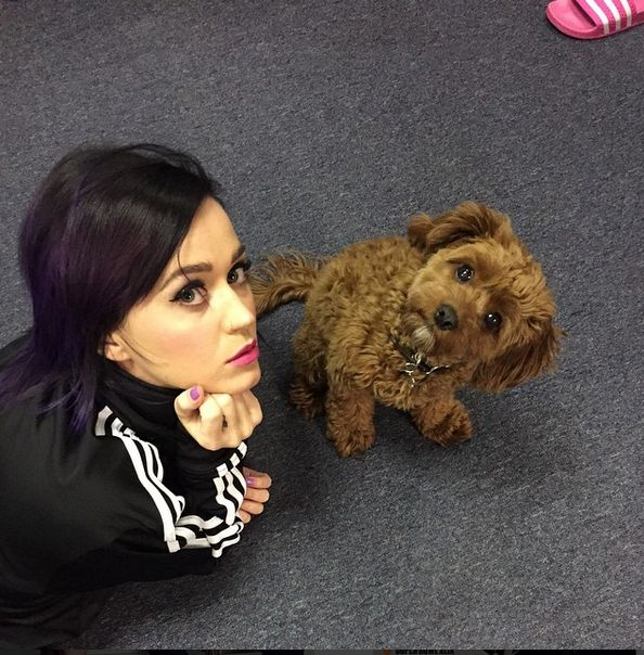 Social Pets Katy Perry's Pup, Butters Katy perry