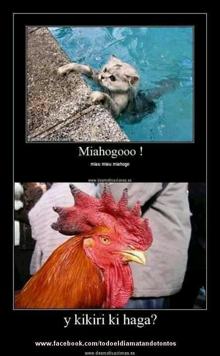 Animales hablando