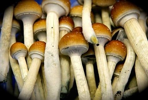 Hallucinogenic mushrooms have been part of human culture as far back as the earliest recorded history, and they are just now gaining renown in the modern world.
