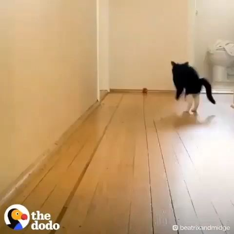 27+ Außergewöhnliche Fakten über Katzen, die Sie umhauen werden #catlovers #catfacts #cat #cats    – Katzenhaushalt